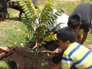 Asistencia_ técnica_reforestación_restaurauración_ ecológica_árboles_nativos