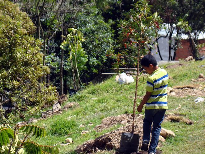 Responsabilidad  social ambiental reforestación