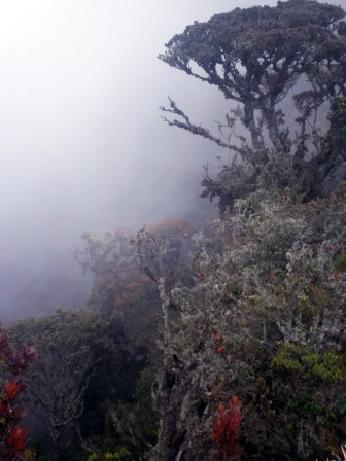 Restauración ecológica bosque andino