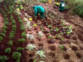 Ejecución tr proyecto de jardinería y paisajísmo