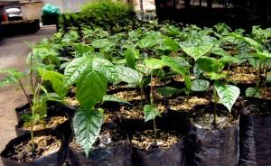 Reforestación protectora y productora